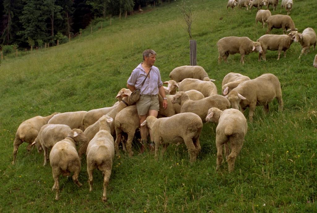 Schafe_auf_der_Weide_03.jpg